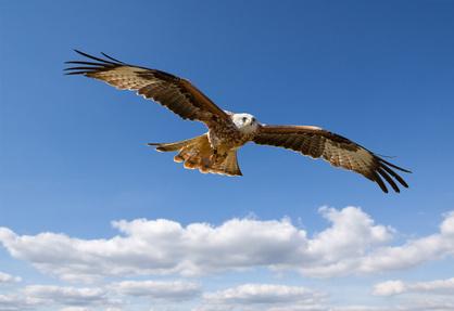 Adler Werbegeschenke Erfahrungen